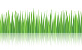 Fototapety High quality textured green grass seamless pattern with reflection, vector illustration.