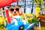 dog summer holiday vacation on hammock
