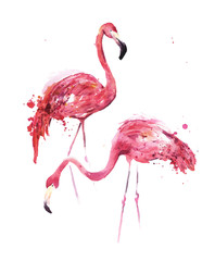 Watercolor, flamingos