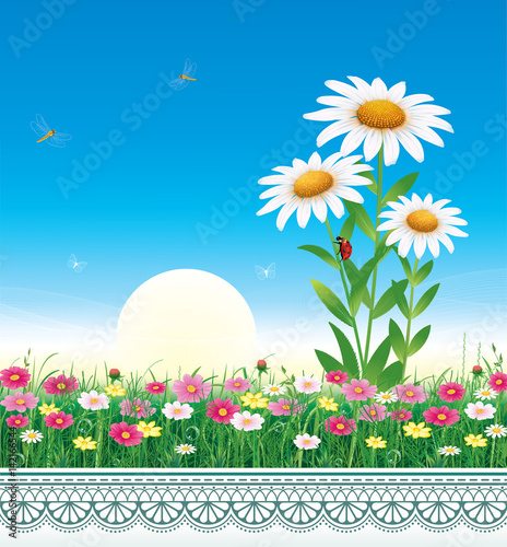 Natural landscape. Flower meadow with daisies