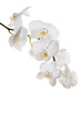 Flowers of white orchids