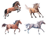 Watercolor painting of galloping horse, free running mustang aquarelle - 142194700