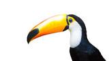 Tukan in Brasilien - 142195759