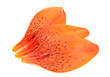 Tiger Lily Petals Isolated