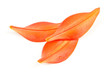 Tiger Lily Petals Isolated (back view)