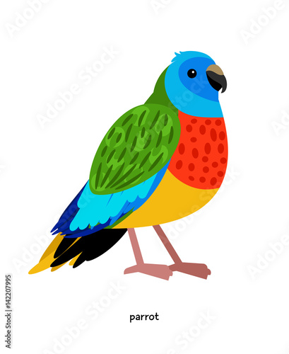 Parrot - beautiful multi-colored bird from Australia