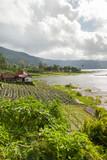 View on agricultural fields near Batur volcano, Kintamani. Winter rainy and cloudy season. Bali, Indonesia.
