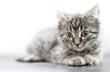 close-up of Little kitten