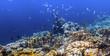 Coral reef island Bonaire