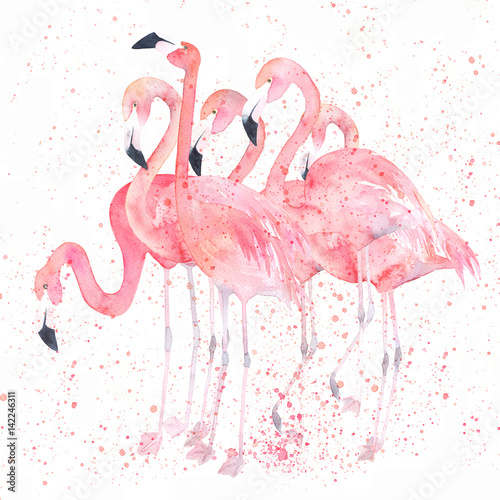 Watercolor flamingos with splash. Painting image - 142246311
