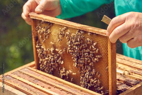 Plexiglas Bee bee