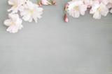 Kirschblüten Hintergrund - 142317348