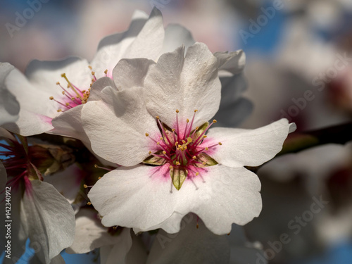 Poster Baumblüte
