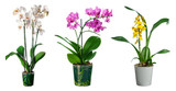 Set of orchid flowers in pot isolated