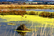 Marsh with green Algae - Farms in the background