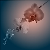 Beautiful orchid flowers. Vintage card. Sad mood.