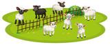White sheeps and black sheeps on the farm
