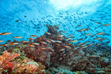 Coral rocks and fishes wall underwater landscape panorama - 142499166