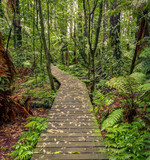 Forest boardwalk