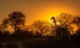 Żyrafa Silhouette