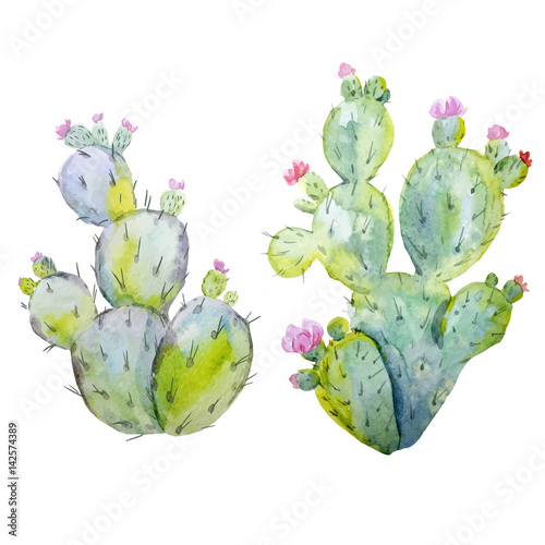 Watercolor cactus vector set - 142574389