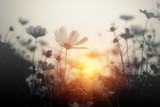 Fototapeta Kosmos - Cosmos flower at sunset © applezoomzoom