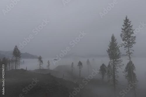 Wald im Nebel, Oregon, USA Poster