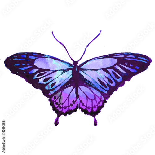 blue butterfly,watercolor,isolated on a white © aboard