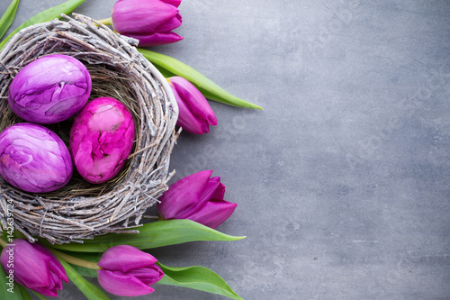 Easter eggs in the nest und tulip. Gray background.