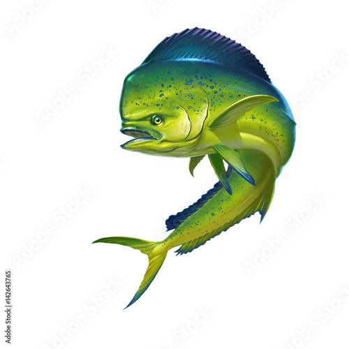 Mahi mahi or dolphin fish on white