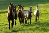 horses on countryside on sunrise on summer