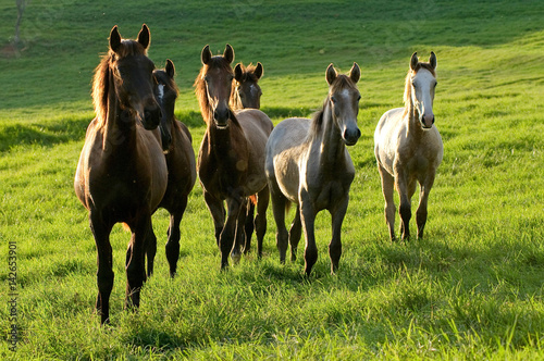 Poster horses on countryside on sunrise on summer