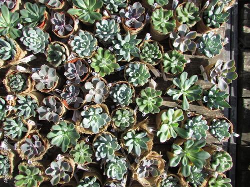 Vivaio di piante grasse
