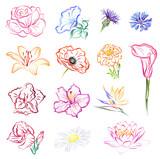 Flowers (Rose, Morning glory, Cornflowers, Lily, Poppy, Marigold, Calla, Gladiolus, Hibiscus, Strelitzia, Daisy, Lotus). Set of hand drawn stylized vector brush flower sketches on white background.