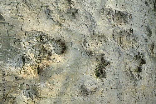 Poster Dinosaur tracks in Wiehengebirge, Westphalia, Germany