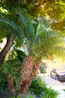 A palm tree in sunlight on a street in Los Angeles. Vertical photography