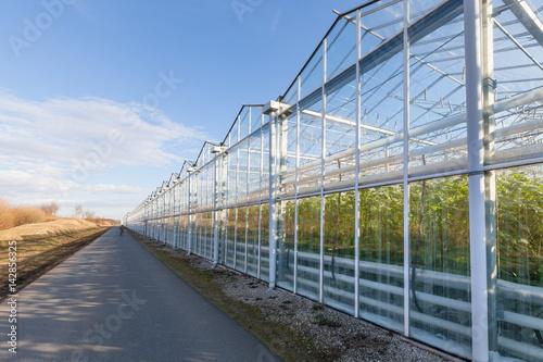 Glashaus Gewächshaus moderne Landwirtschaft