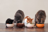 Domestic cats eat pet food on the floor from bowls