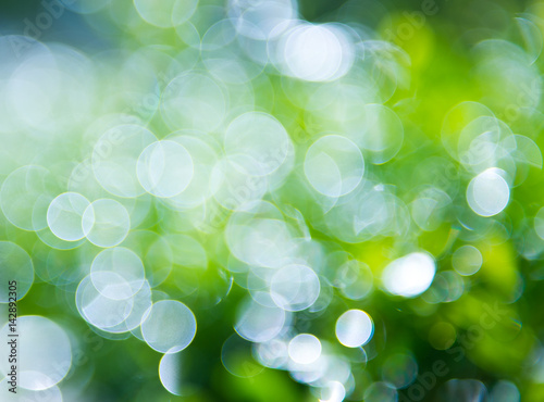 Keuken foto achterwand Paardebloemen en water natural green background with bokeh circles.