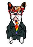 Portrait of french bulldog wearing glasses