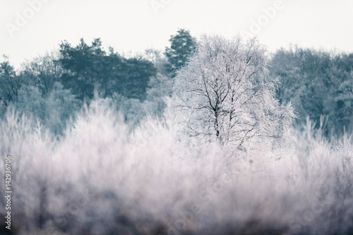 Bare tree with hoarfrost in winter landscape.