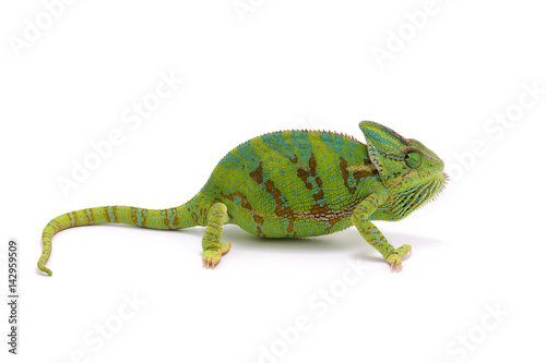 Fotobehang Kameleon chameleon isolated on white background