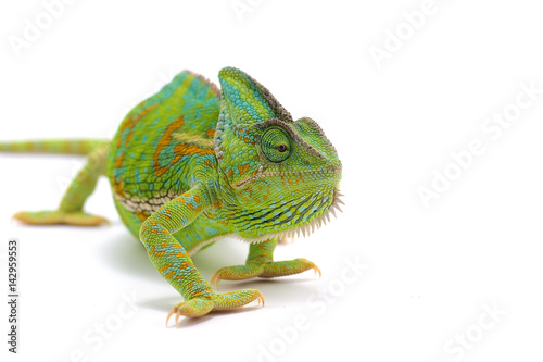 Plexiglas Kameleon chameleon isolated on white background