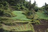 Plantation Fields - Peru