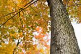 Autumn scene tree