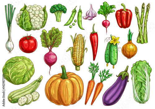 Vegetables isolated sketch set with fresh veggies