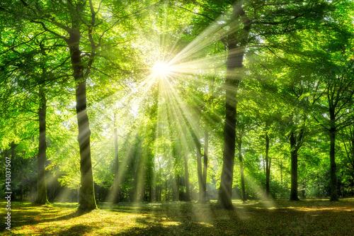Grüner Wald im Sommer
