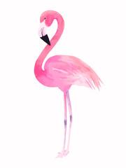 Watercolor pink flamingo. Vector illustration