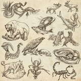 Animals in action, Predators - An hand drawn full sized illustrations. Collection on white. - 143057960