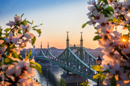 Budapest, Hungary - Beautiful Liberty Bridge at sunrise with cherry blossom and morning sun Poster